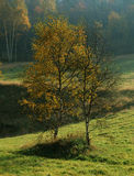 The autumn meeting. And wooded landscape Stock Images