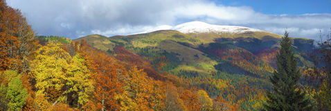 Autumn meets winter. Scenic panorama of the Ukrainian Carpathians in the golden October season, when the first snow appears on the mountain tops Royalty Free Stock Photos