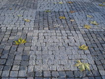 Autumn melancholia. Autumn sycamore leaves on cobbled parkway Stock Photos
