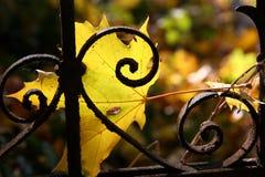 Autumn melancholy. Yellow maple leaf on fence in autumn royalty free stock photos