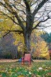 Autumn in Melbourne. Autumn / Fall colours in Melbourne Australia royalty free stock image