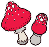 Autumn mellow amanita mushrooms Stock Photography