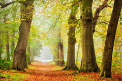Autumn Melody. Beautiful autumn scene in a foggy day Stock Images