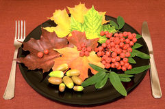 Autumn menu Royalty Free Stock Image