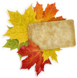 Autumn_Message. Isolated Red, Yellow and Orange Maple leaves and old paper card Stock Photos