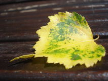 Autumn messenger Royalty Free Stock Images