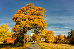 Autumn in the middle of Sweden Royalty Free Stock Image