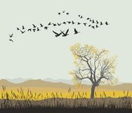 Autumn migration of wild geese Stock Image