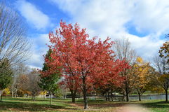 Autumn at Miller Park Stock Image
