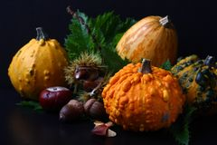 Autumn mini pumpkin with green leafs over black Stock Photography