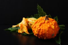 Autumn mini pumpkin with green leafs over black Stock Photo