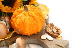 Autumn mini pumpkin on old wooden board Royalty Free Stock Images