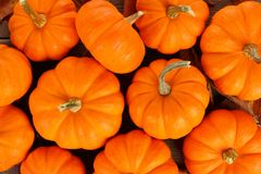 Autumn mini pumpkins background Royalty Free Stock Photo
