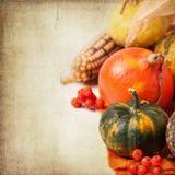 Autumn mini pumpkins Stock Photos