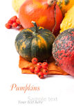 Autumn mini pumpkins. And berries over white with sample text Royalty Free Stock Photography