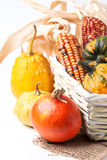Autumn mini pumpkins Royalty Free Stock Photo