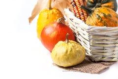 Autumn mini pumpkins Stock Photo
