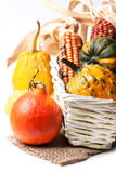 Autumn mini pumpkins Royalty Free Stock Images
