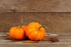 Autumn mini pumpkins with leaves on rustic wood Stock Images