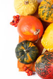 Autumn mini pumpkins Royalty Free Stock Image