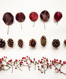 Autumn minimalist composition with leaves, cones and berries, placed in lines. Top view, flat lay, white background Stock Photos