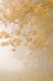 Autumn mist. Foggy morning -beautiful colors of autumn - the leaves staining Stock Photo