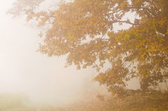 Autumn mist Stock Photos