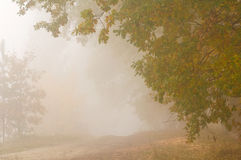 Autumn mist Stock Images
