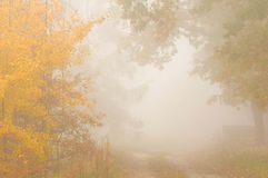 Autumn mist. Foggy morning -beautiful colors of autumn - the leaves staining Stock Photography