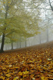 Autumn mist. Misty autumn woods with couloured leafes Royalty Free Stock Photos