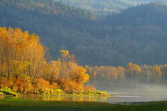 Autumn mist. Sunlight on golden autumn trees by the water, with mist rising up Stock Photography