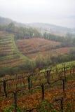 Autumn mist in Alpine vineyard. Vertical Royalty Free Stock Images