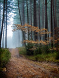 Autumn and mist... Royalty Free Stock Images