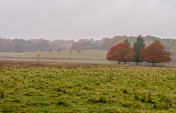 Autumn mist Stock Image