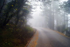 In the autumn mist. Autumn fog in the mountain forest Stock Photo