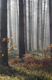Autumn mist in forest Stock Photo