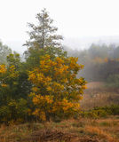 Autumn mist Royalty Free Stock Photography