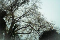 Autumn mist tree Stock Images