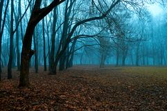 Autumn misterious landscape - foggy forest with bare trees and fallen red autumn leaves. Autumn mysterious landscape - foggy forest with bare trees and fallen royalty free stock photos
