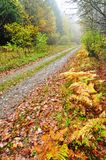 Autumn misty day Stock Photos