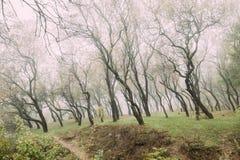 Autumn Misty Deciduous Forest Landscape photographie stock libre de droits
