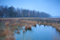 Autumn misty fog over swamp Royalty Free Stock Photo