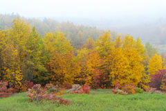 Autumn misty forest Stock Images