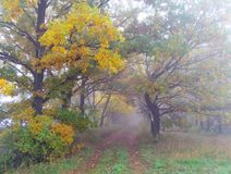 Autumn misty forest Royalty Free Stock Images