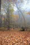 Autumn misty forest. Autumn forest with fog among trees and a lot of fallen leaves Royalty Free Stock Photos
