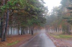 Autumn misty morning Royalty Free Stock Image
