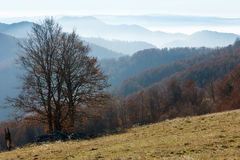 Autumn misty mountain landscape. Royalty Free Stock Photos