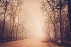 Autumn misty park Stock Images