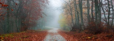 Autumn misty path panorama. A misty autumn path in the forest Stock Photography