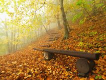 The autumn misty and sunny daybreak at beech forest, old abandoned bench below trees. Fog between beech branches. Royalty Free Stock Images